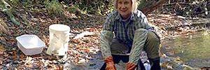 Studying freshwater invertebrates since 1984